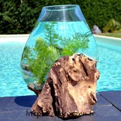 Aquarium ou bol à punch en verre recyclé soufflé sur du bois